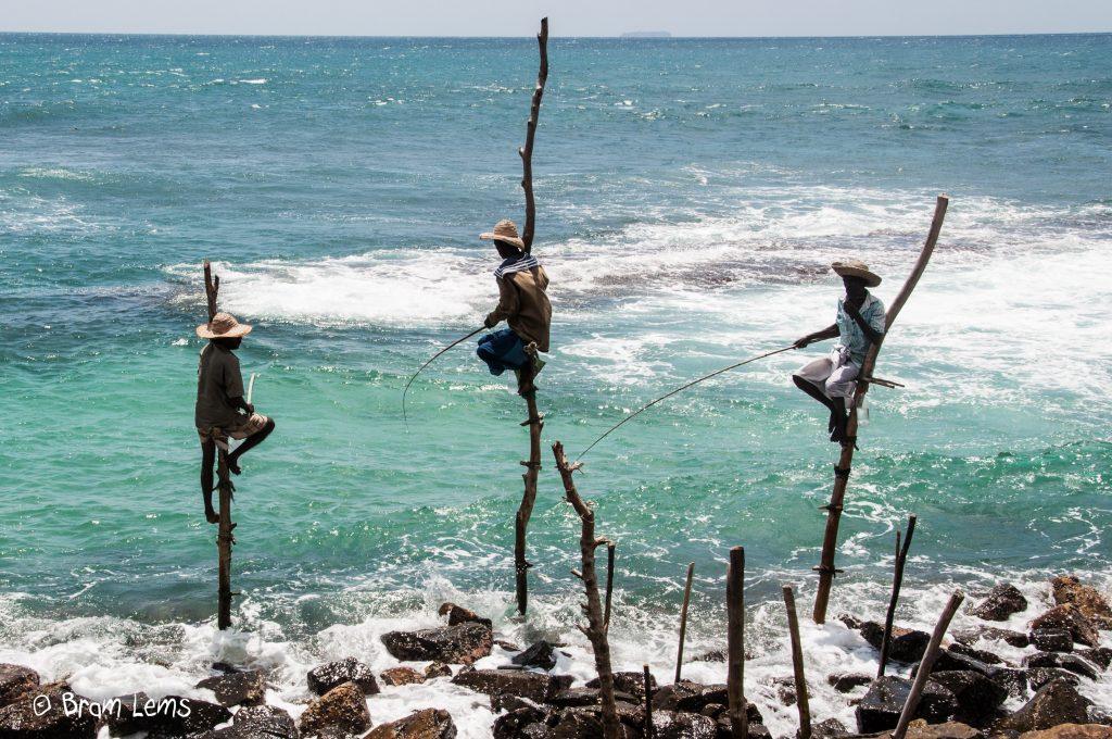 Paalvissers-Sri-Lanka